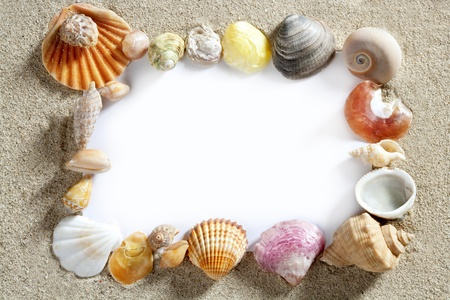 seashells: border summer shells frame composition over beach sand beach with blank paper Stock Photo