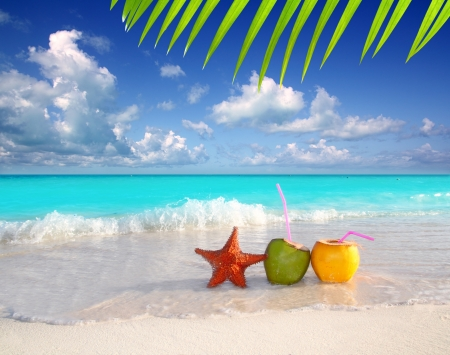 beach animals: coconut cocktails juice and starfish in tropical Caribbean beach