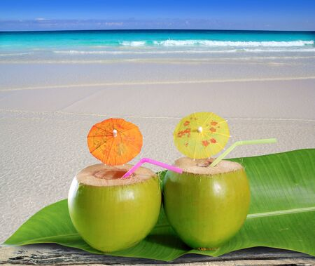 with coconut: fresh tender green coconuts straw cocktails on tropical caribbean beach