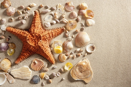 beach with white sand and starfishwith shells still life like summer vacation background photo