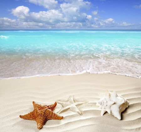 caribbean shell and starfish over wavy white sand beach such a summer vacation symbol photo