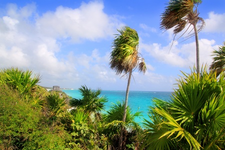 chit: Caribbean beach in Tulum Mexico turquoise aqua with chit palm trees