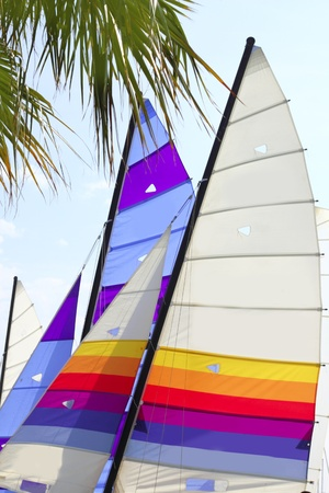 hobie: hobie cat colorful sails under palm tree as summer sport symbol Stock Photo