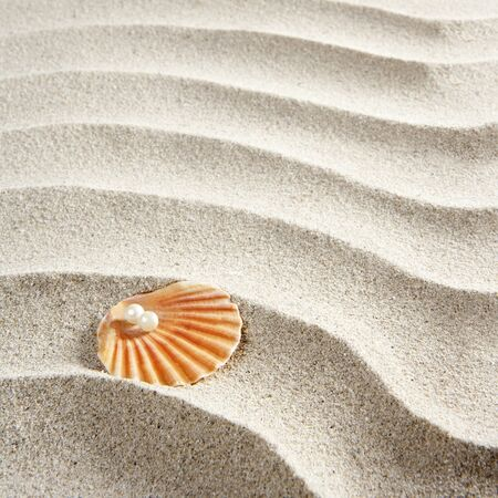 Caribbean pearl on shell in white wavy sand beach photo