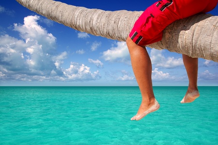inclined: Caribbean inclined palm tree beach with male tourist legs sitting like riding the trunk