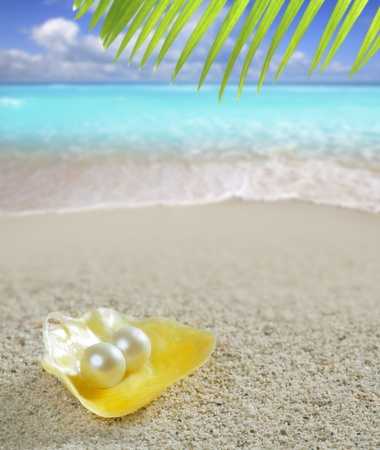 pearly: Caribbean pearl on shell white sand beach summer tropical turquoise sea Stock Photo