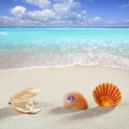 almeja: Playa verano vacaciones fondo concha Perla almeja caracol tropical s�mbolo