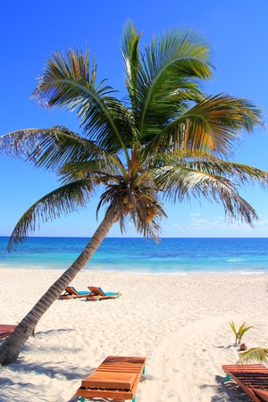 Caribbean coconut palm trees in perfect tuquoise sea photo