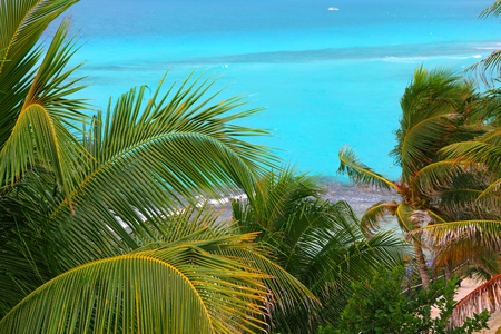 Caribbean turquoise sea background with coconut palm trees foreground photo