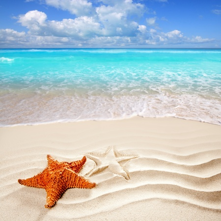 beach scene: caribbean starfish over wavy white sand beach such a summer vacation symbol