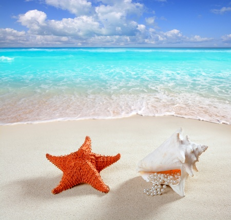 conch: beach sand with starfish and  pearl necklace shell like a summer vacation symbol in turquoise caribbean