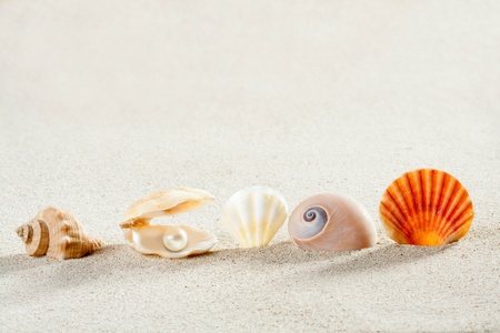 beach summer vacation background with shells pearl and snail like a tropical symbol photo