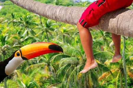 Caribbean inclined palm tree beach with tourist sitting riding the trunk and toco toucan Stock Photo - 10214382