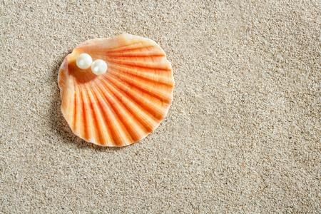 almeja: playa de arena blanca con una perla en la concha de almeja primer macro