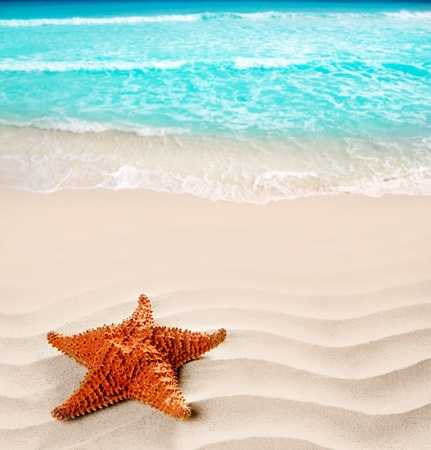 caribbean starfish over wavy white sand beach such a summer vacation symbol photo