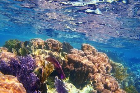 Caribbean coral reef Mayan riviera colorful species underwater treasure photo