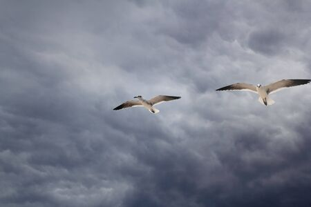 cloudy dramatic sky with two seagull flying before storm photo