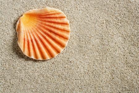 clam shell macro on clear white caribbean sand closeup photo