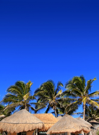 sun roof: coconut palm tree under blue sky with hut palapa sun roof Stock Photo