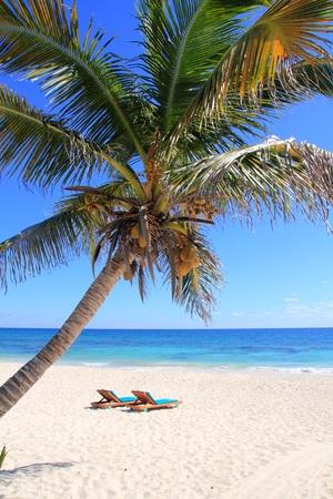hamaca: Caribe de palma de coco árboles en el mar tuquoise perfecto Foto de archivo