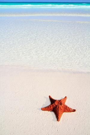 etoile de mer: belle �toile de mer des Cara�bes sur blanc tropicale plage de sable et de l'eau turquoise Banque d'images