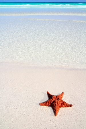 sandy: hermosa estrella de mar caribe en playa tropical de arena blanca y agua turquesa Foto de archivo