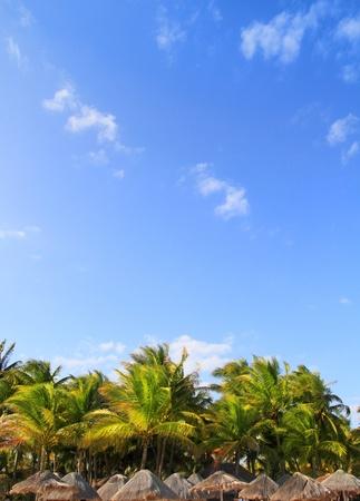 palapa: Mayan riviera tropical sunroof palapa hut skyline with coconut palm trees under blue sky