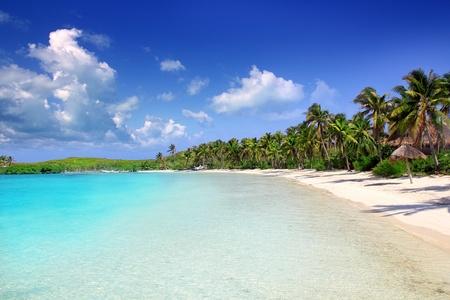 Contoy 섬 야자수 멕시코의 열대 카리브 하얀 모래 해변 스톡 콘텐츠