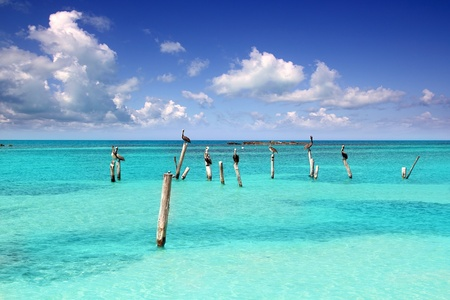 cancun: Caribbean pelican on turquoise beach poles in tropical seascape view in Mexico Stock Photo