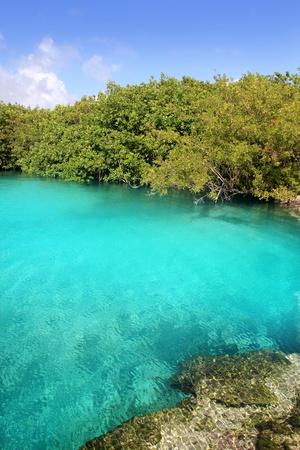 riviera maya: cenote mangrove with clear turquoise water in Mayan Riviera Mexico
