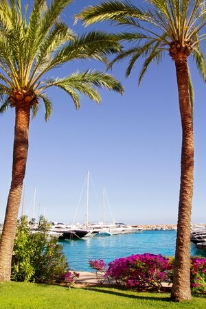 bougainvilleas: Calvia Puerto Portals Nous view from bougainvilleas garden in Mallorca Balearic Island