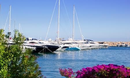 balearic: Calvia Puerto Portals Nous view from bougainvilleas garden in Mallorca Balearic Island