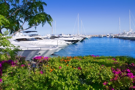Calvia Puerto Portals Nous view from bougainvilleas garden in Mallorca Balearic Island photo