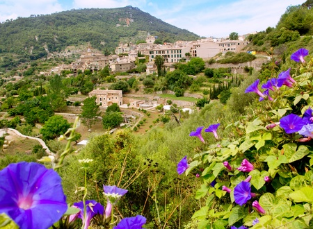 foreground: Valldemossa from Majorca view from purple Ipomea flowers foreground