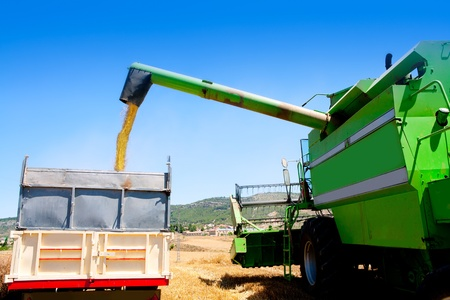 agronomics: Combine harvester unloading wheat cereal in truck