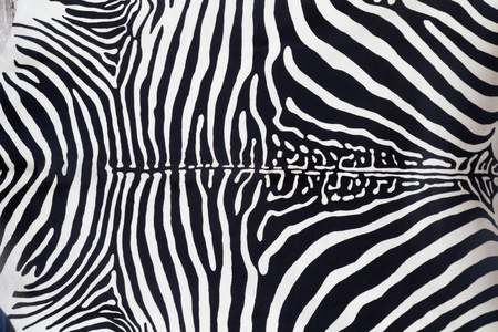 Zebra leather skin texture painted from a cow Stock Photo - 10743404