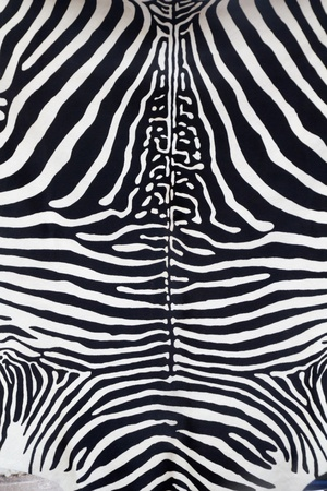 Zebra leather skin texture painted from a cow photo