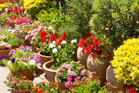 planter: Spanish colorful flowers garden detail in spain Stock Photo