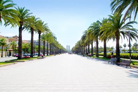 beach boulevard in Salou with palm trees in Tarragona Spain photo