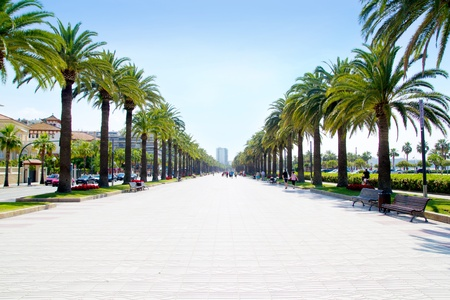 palm garden: beach boulevard in Salou with palm trees in Tarragona Spain