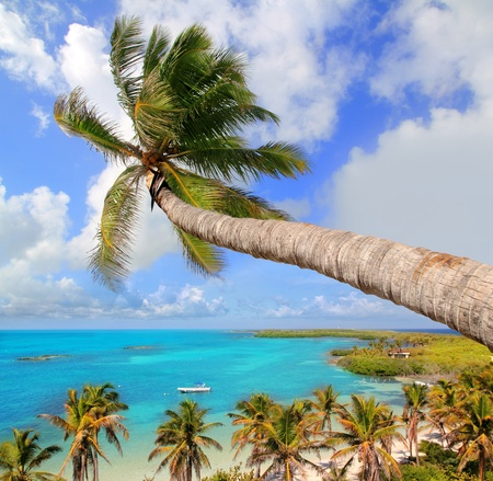 Palm tree in tropical perfect beach at Cancun photo