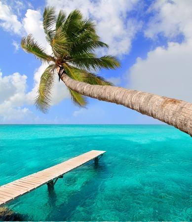 Palmera en playa perfecta tropical en las islas Baleares Foto de archivo