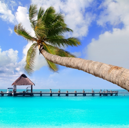 Palm tree in tropical perfect beach at Cancun