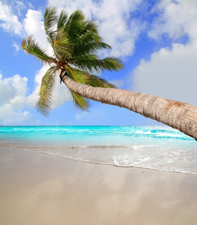 Palm tree in tropical perfect beach at Caribbean sea Stock Photo - 10743419