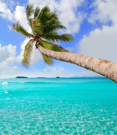 Palm tree in tropical perfect beach at Ibiza Formentera