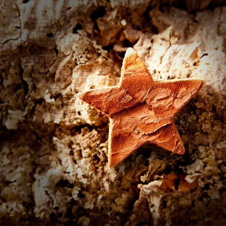 bark star shape christmas symbol on cork background Stock Photo - 10743099
