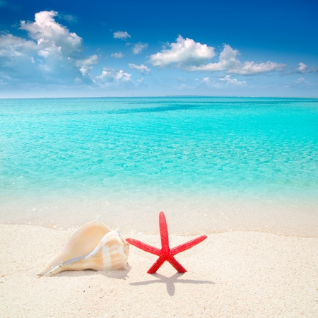beach scene: Starfish and seashell in white sand beach with turquoise tropical water Stock Photo