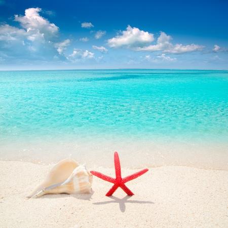 Zeester en zeeschelp in wit zand strand met turquoise tropische water Stockfoto