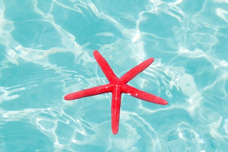 Red starfish floating on perfect tropical sea in ripple beach photo