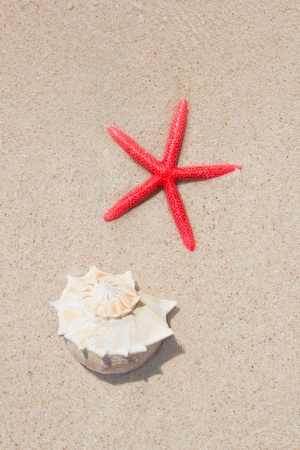 seashell and starfish in white sand beach as summer vacation symbols photo